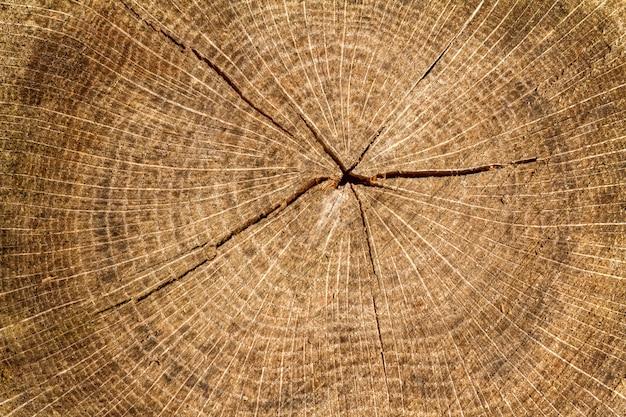 Seção transversal de log, textura do círculo