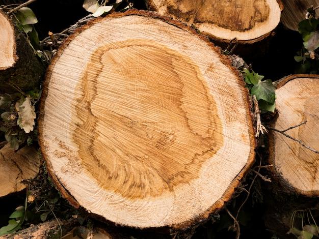 Seção transversal, de, um, árvore