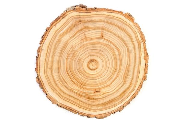 Seção transversal de uma fatia de tronco de árvore de madeira cortada com padrão ondulado de rachaduras e anéis serrados da floresta
