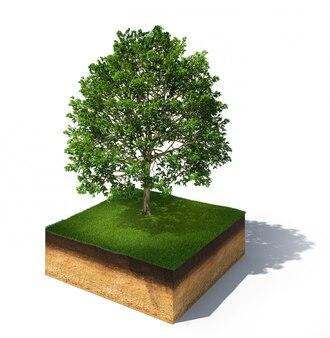 Seção transversal do solo com uma árvore alta, isolada no branco
