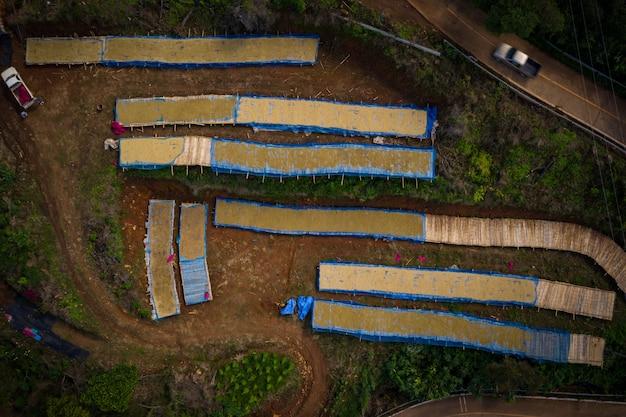 Secar o grão de café cru no chão indústria familiar local na tailândia