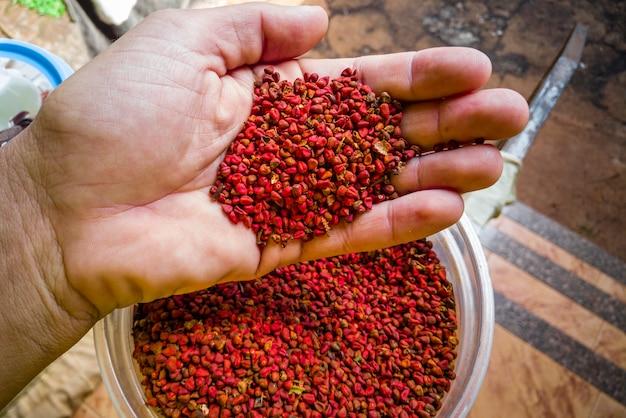 Segurando grãos de urucum na mão.