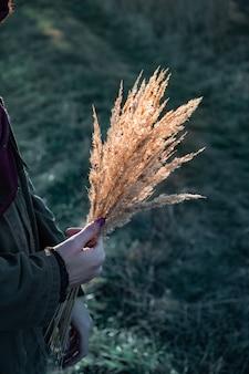 Segurando um monte de gramíneas contra o sol de outono da tarde. mãos femininas com um buquê de flores do campo em uma cena ao ar livre iluminada pelo sol