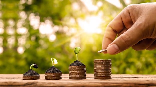 Segurando uma moeda e uma pequena árvore plantada em pilhas de moedas e luz natural, contabilidade financeira e o conceito de economia de dinheiro