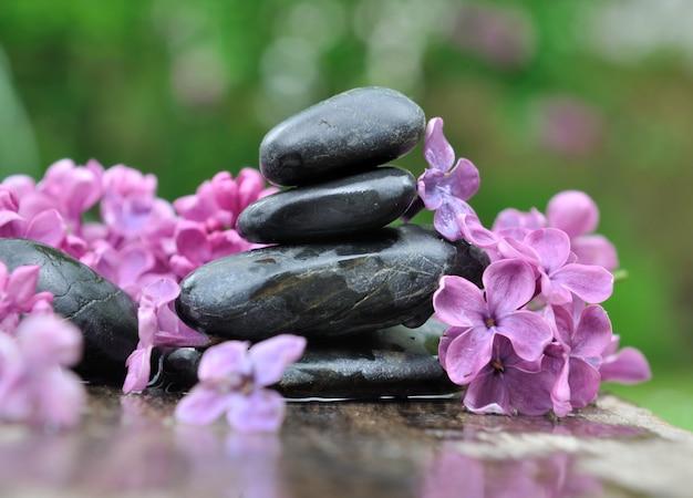 Seixos pretos entre pétalas de lilás sobre fundo verde