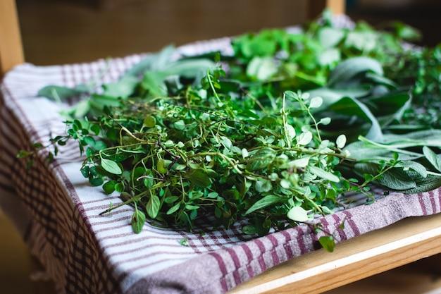 Seleção de ervas colhidas em casa