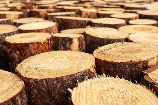 Seleção de tocos de madeira no campo