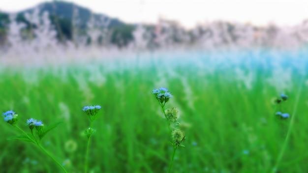 Selecção close-up grama flores no campo de grama borrão