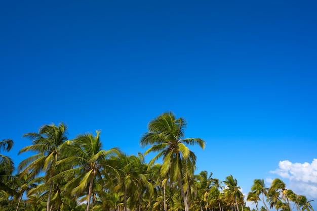 Selva de palmeiras de tulum na praia riviera maia