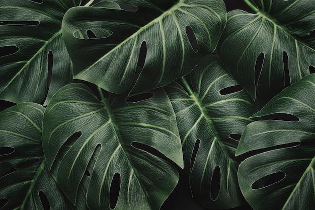 Selva dramática mística noturna e folhas de monstera e padrão de layout em floresta tropical temperamental