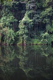 Selva e lago na tailândia