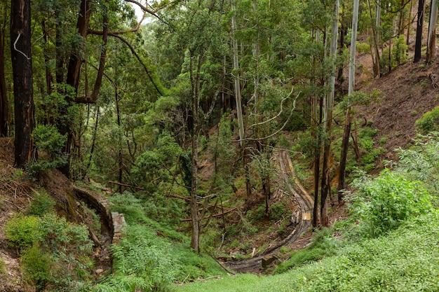 Selva montanhosa densa, vegetação densa. uma floresta tropical.