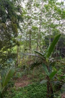 Selva suculenta em bali close-up