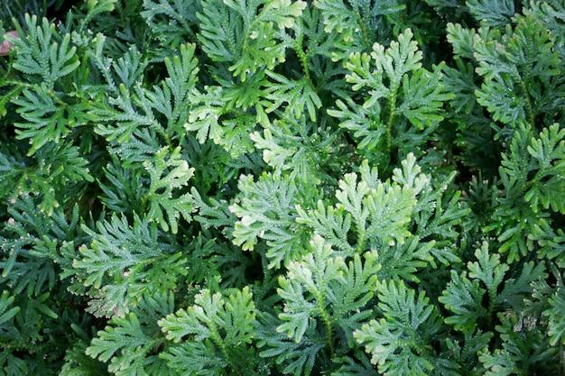 Selva verde folhas no jardim tropical
