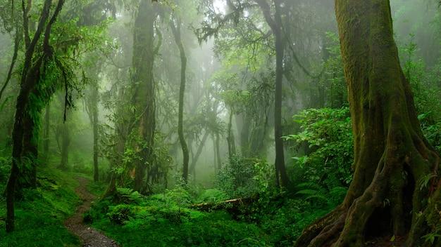 Selvas tropicais do sudeste asiático