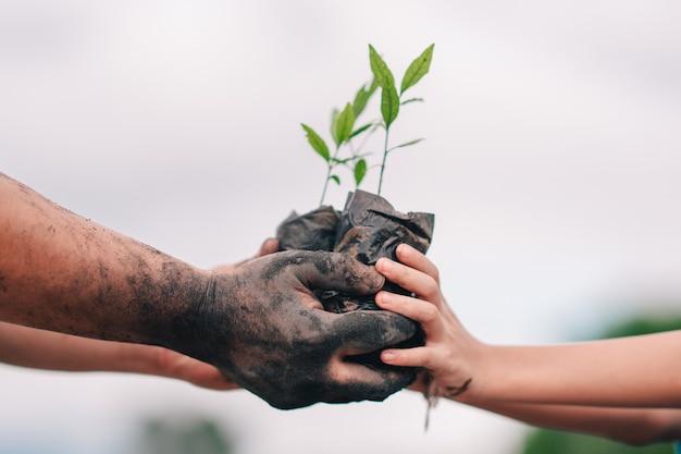 Semeadura de árvore e mão de pessoas adultas e crianças para plantio na terra