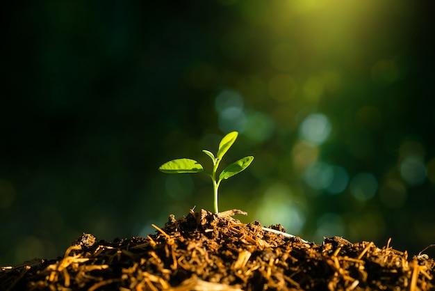 Semeadura está crescendo no solo com o pano de fundo da luz do sol
