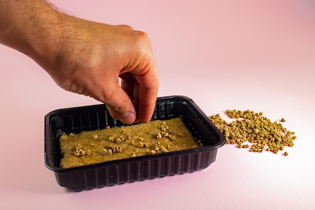 Semeando sementes verdes em um recipiente de plástico com um tapete de linho