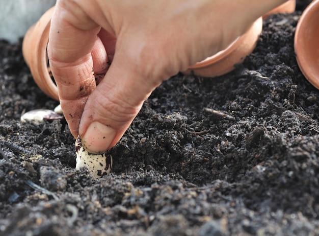 Semeando sementes