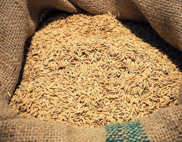 Semente de arroz marrom em sacos de cânhamo ou saco de serapilheira