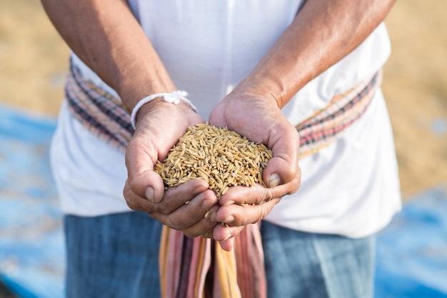 Semente de arroz na mão do agricultor