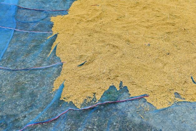 Semente de arroz seco em casca crua - conceito de arroz de moagem