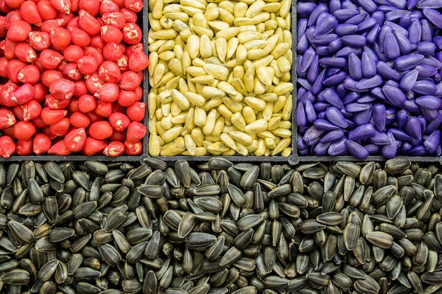 Semente sementes de girassol, milho, rabanetes. cor agro pintada para classificação e rotulagem