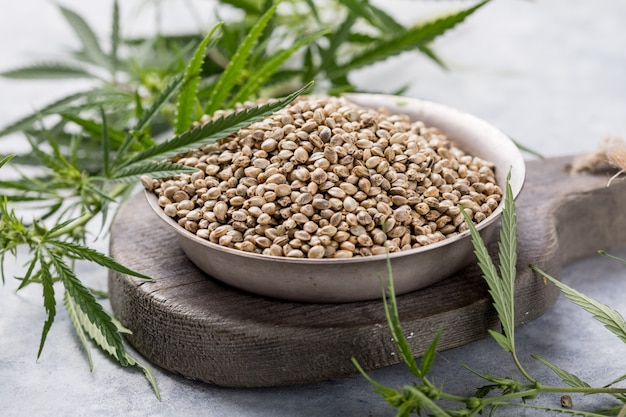 Sementes de cânhamo, planta cannabis cbd.