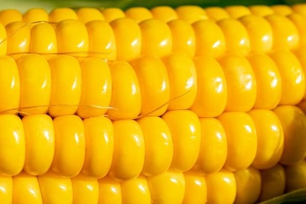 Sementes de close-up de milho doce em uma fileira. abstrato base e textura de milho de frescura.