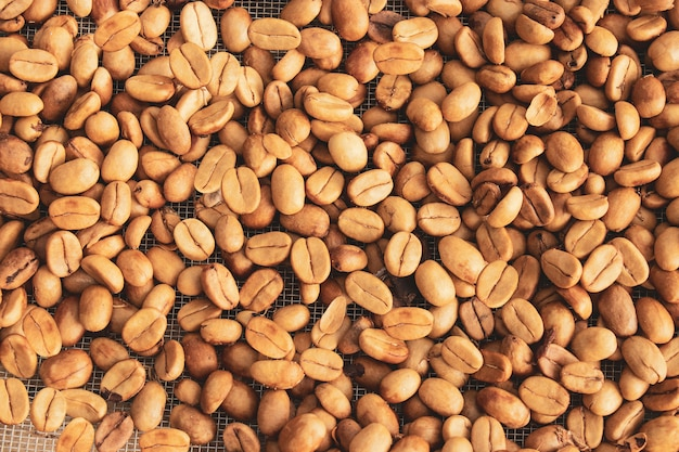 Sementes de grãos de café secando em uma peneira com o sol.