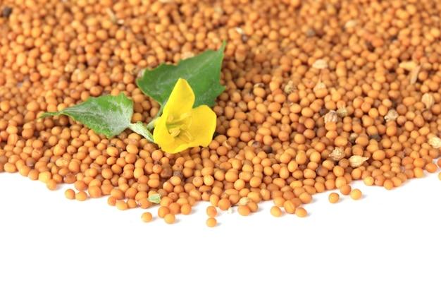 Sementes de mostarda com flor de mostarda isolada no branco