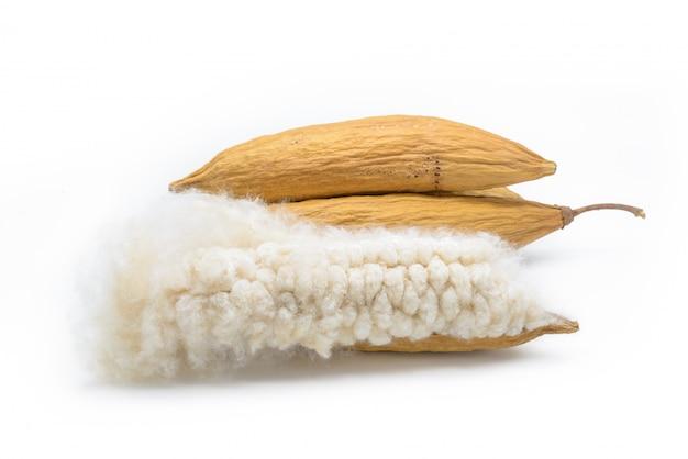 Sementes de sumaúma com fibra branca para fazer travesseiro