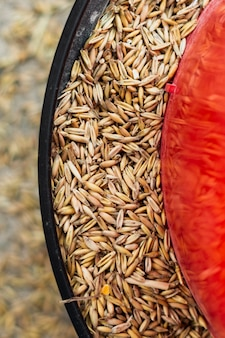 Sementes de trigo em um prato de alimentação para animais