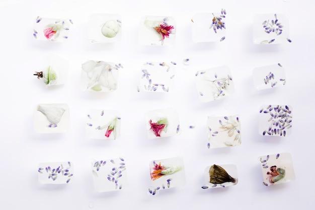 Sementes e flores em cubos de gelo