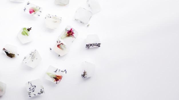 Sementes e plantas em cubos de gelo