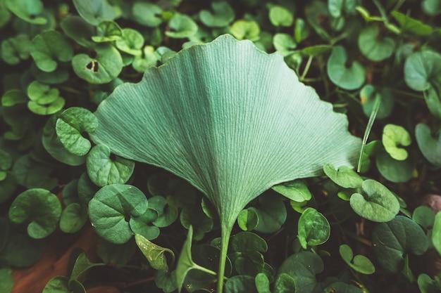Sendo especial, uma única folha se destaca do resto das plantas, com tons suaves e grãos de filme adicionados.