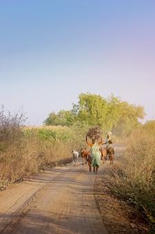 Senhora indiana velha andando na maneira de fazenda com cabra