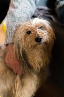 Senior mans mão enrolada cão de raça de cabelos compridos.