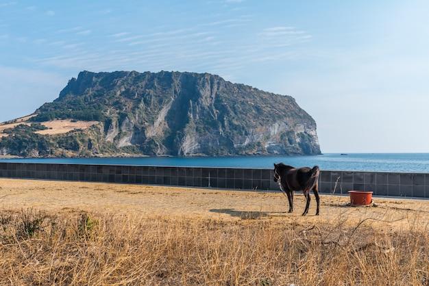 Seongsan ilchulbong, ilha de jeju, coreia do sul.
