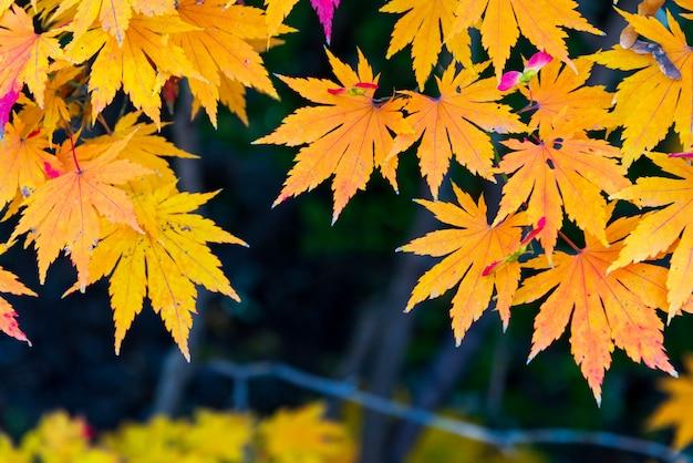 Seque a folha alaranjada do outono com espaço para seu projeto.
