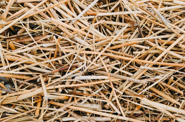 Seque a textura amarela do fundo da grama de palha após o havest.