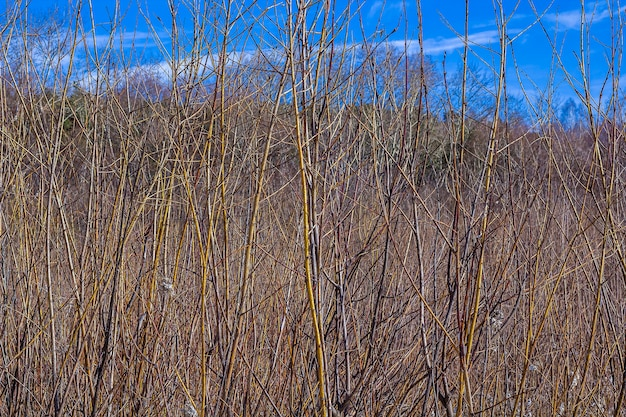 Seque árvores nuas e galhos contra o céu azul.