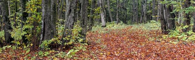 Seque as folhas caídas na estrada na floresta de outono, panorama