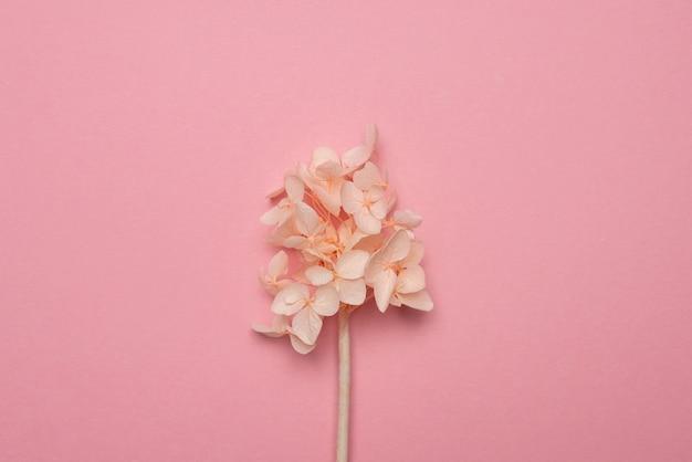 Seque flores delicadas em uma superfície de papel rosa