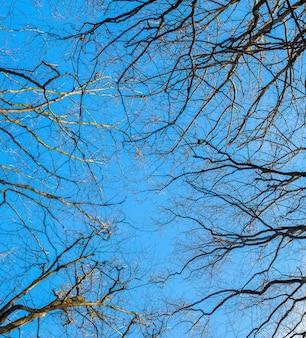 Seque galhos de árvores nuas em um fundo de céu azul com tempo ensolarado
