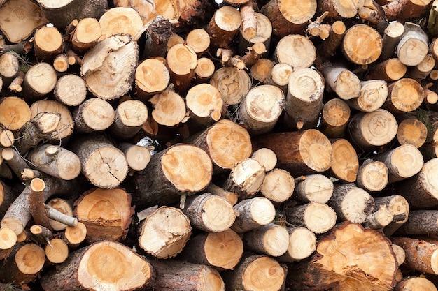 Serrado e empilhado sobre um monte de troncos de pinheiro durante a sua colheita. fechar-se.