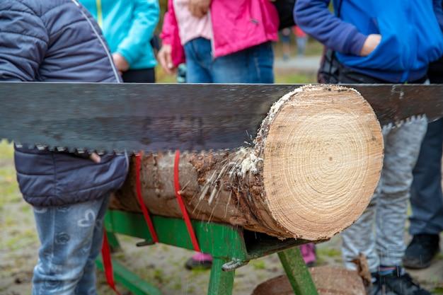 Serrar toras com uma serra de duas mãos na floresta para corte