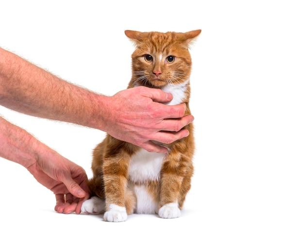 Sessão de treinamento com um jovem gato ruivo de raça mista