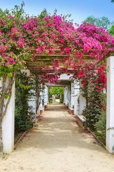 Sevilha maria luisa park jardins espanha