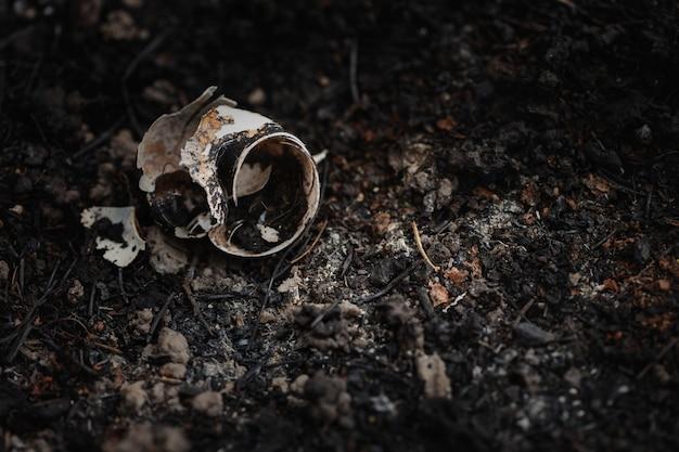 Shell de caracol selvagem carbonizado cinzas após incêndio. o aquecimento global, proteger florestas, conservar o conceito de meio ambiente.